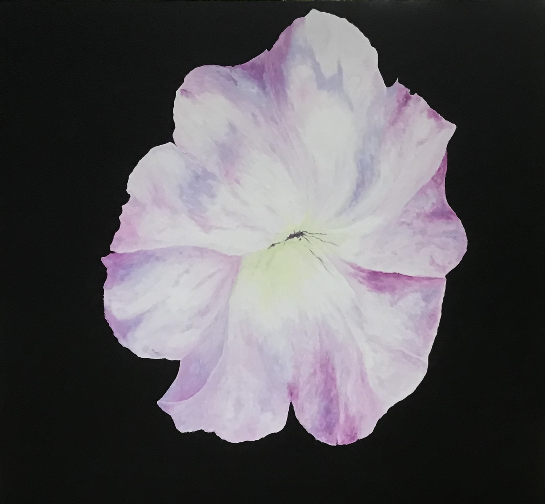 "Petunia 28 x 26"""