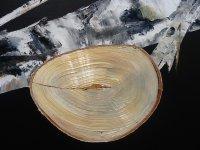 Closeup Fire wood